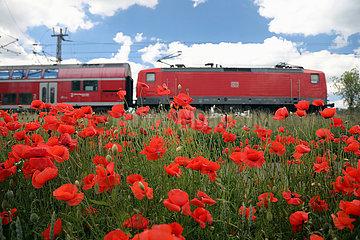 Trebbin  Deutschland  Regionalexpress der Deutschen Bahn faehrt an einem Mohnblumenfeld vorbei