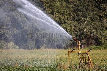 Ruebenfeld wird bei Trockenheit bewaessert  Inden  Nordrhein-Westfalen  Deutschland