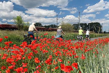 Trebbin  Deutschland  Menschen fahren bei einer Fahrradtour an einem Mohnblumenfeld vorbei