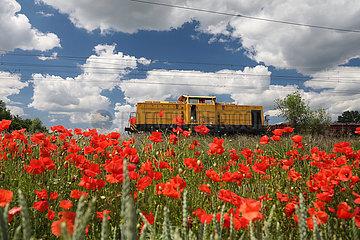 Trebbin  Deutschland  Triebwagen eines Gueterzuges faehrt an einem Mohnblumenfeld vorbei