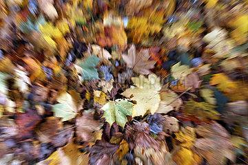 Berlin  Deutschland  Herbstlaub