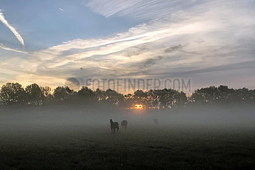 Gestuet Itlingen  Pferde bei Sonnenaufgang auf einer nebelverhangenen Weide