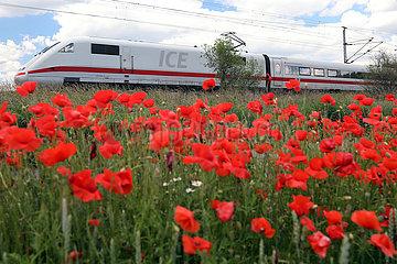Trebbin  Deutschland  ICE der Deutschen Bahn faehrt an einem Mohnblumenfeld vorbei