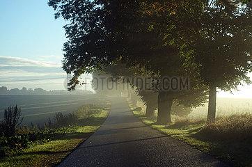 Neu Heinde  Deutschland  LKW faehrt bei Sonnenaufgang auf einer Allee durch den Nebel