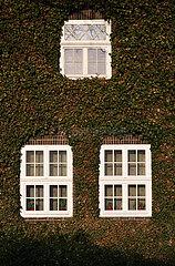 Deutschland  Bremen - Efeu an der Fassade eines alten Gebaeudes (Verwaltung eines Frieddhofs)