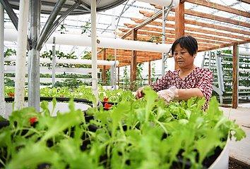 CHINA-HEBEI-HEJIAN-AGRICULTURE (CN)