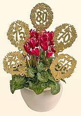 Alpenveilchen  Geburtstagsgeschenk  50.  65.  70.  75.  80. Geburtag  Symbolbild Alter
