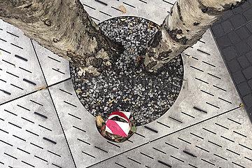 Baum im Stadtraum