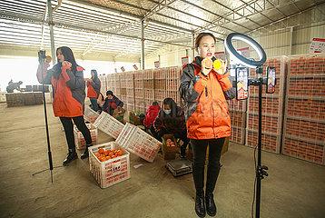 #CHINA-HUBEI-ZIGUI-ORANGE-LIVE STREAMING-SALE (CN)