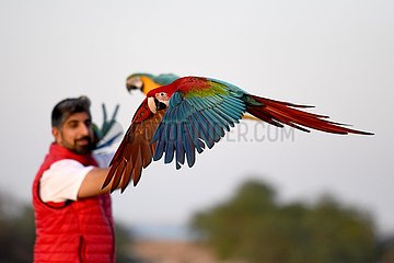 KUWAIT-Jahra GOVERNORATE-PARROT TRAINING-SHOW KUWAIT-Jahra GOVERNORATE-PARROT TRAINING-SHOW KUWAIT-Jahra GOVERNORATE-PARROT TRAINING-SHOW KUWAIT-Jahra GOVERNORATE-PARROT TRAINING-SHOW KUWAIT-Jahra GOVERNORATE-PARROT TRAINING-SHOW KUWAIT-Jahra GOVERNORATE- PARROT TRAINING-SHOW