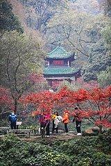 CHINA-HUNAN-CHANGSHA-AHORN VIEW (CN)
