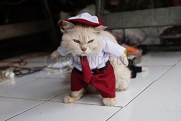 INDONESIEN-BOGOR-CAT-KOSTÜME