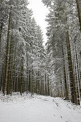 Verschneiter Wald  Winterberg  Sauerland  Nordrhein-Westfalen  Deutschland