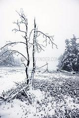 Schneelandschaft auf dem Berg Kahler Asten  Winterberg  Sauerland  Nordrhein-Westfalen  Deutschland