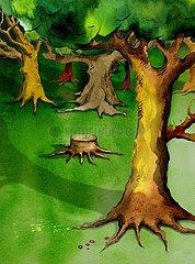 Laubwald mit Eichen