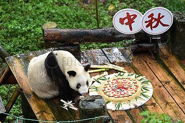 CHINA-CHONGQING-PANDA-LONGEVITY (CN)