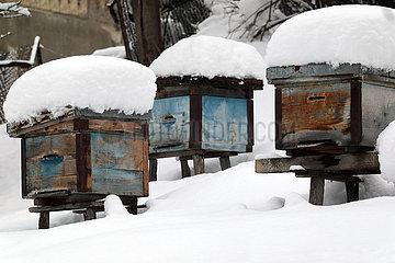 Mestia  Georgien  Bienenbeuten sind im Winter mit Schnee bedeckt
