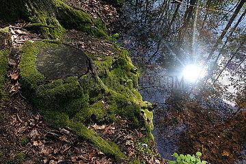 Dranse  Deutschland  Baumstumpf im Wald ist mit Moos bewachsen