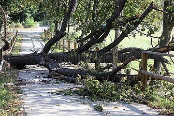 Gestuet Graditz  Sturmschaden: Baum ist auf einen Koppelzaun gefallen