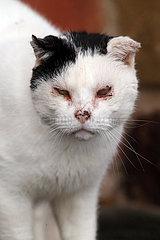 Vogelsdorf  alte Katze hat eine Bindehautentzuendung