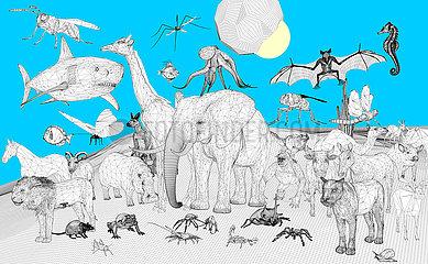 Schoepfung  Tierreich