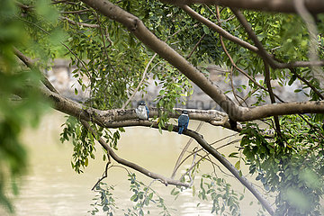 SINGAPUR-LANDSCHAFT-BIRD