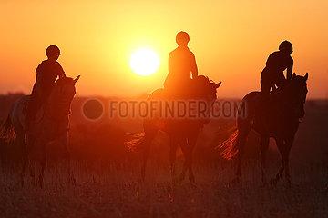 Gestuet Westerberg  Silhouette: Frauen reiten bei Sonnenaufgang ueber ein Stoppelfeld