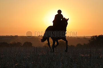 Gestuet Westerberg  Silhouette: Frau reitet bei Sonnenaufgang ueber ein Stoppelfeld