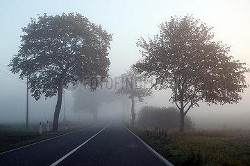 Neu Heinde  Deutschland  Landstrasse versinkt im Nebel