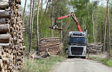 Doebrichau  Deutschland  Baumstaemme werden auf einen LKW geladen