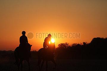 Gestuet Westerberg  Silhouette: Reiter machen bei Sonnenaufgang einen Ausritt