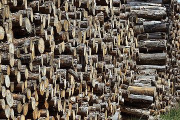 Doebrichau  Deutschland  gestapelte Baumstaemme