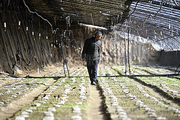 CHINA-NINGXIA-YINCHUAN-AGRICULTURAL INDUSTRY-DEVELOPMENT (CN)