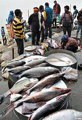 INDIA-GUWAHATI-BHOGALI BIHU FESTIVAL-FISH MARKET