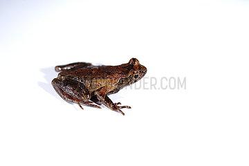 CHINA-ZHEJIANG-Lishui-NEW Frosch-Spezies (CN)