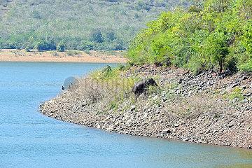 INDIEN-KARNATAKA-WILD ELEPHANT RESCUE INDIA-KARNATAKA-WILD ELEPHANT RESCUE