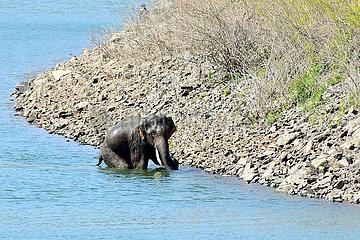 INDIEN-KARNATAKA-WILD ELEPHANT RESCUE