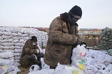CHINA-HEILONGJIANG-suihua-Pflanzenfrucht-SUPPLY (CN) CHINA-HEILONGJIANG-suihua-Pflanzenfrucht-SUPPLY (CN)