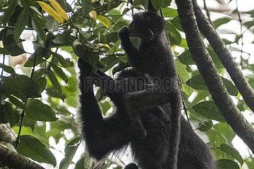 SINGAPUR-NATURE RESERVE-ANIMAL