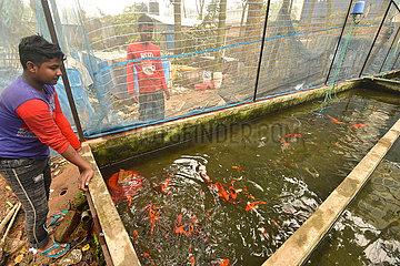BANGLADESH-DHAKA-AQUARIUM-FISH-FARMING