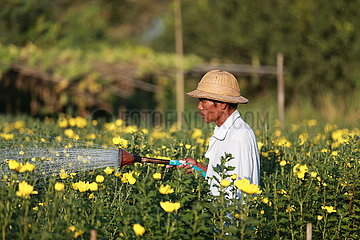 MYANMAR-YANGON-WORKER-FLOWER FARM