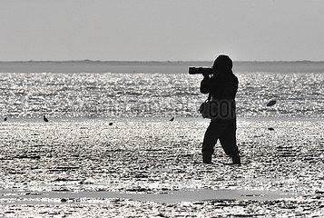 CHINA-HAINAN-wandernde Wasservögel-BIRD Beobachtung (CN)