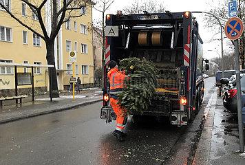 Berlin  Deutschland  Mitarbeiter des privaten Entsorgungsunternehmens ALBA entsorgt einen Weihnachtsbaum