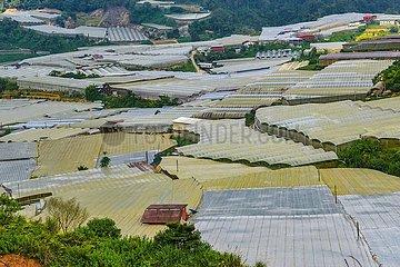 Gewächshäuser in den Cameron Highlands  Malaysia | greenhouses in the Cameron Highlands  Malaysia
