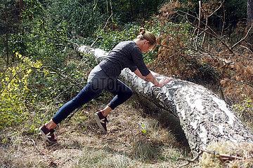 Walkmuehle  Deutschland  Frau macht im Wald an einem umgestuerzten Baum Sport