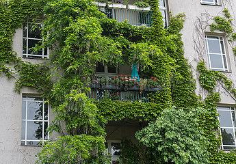 Berlin  Deutschland - Zugewachsene Hausfassade