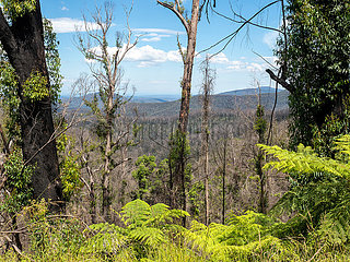AUSTRALIA-POST-FIRE RECOVERY-FOREST-RESEARCH