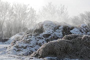 Bruchmuehle  Misthaufen dampft im Winter