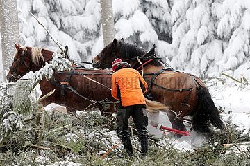 Kretscham  Deutschland  Holzrueckepferde bei Schneefall im Einsatz
