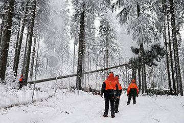Kretscham  Deutschland  Forstarbeiter faellen im Winter eine Kiefer